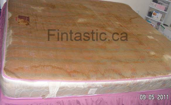 Mattress Cleaned And Restored Fintastic Services