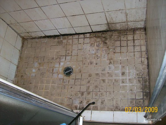 Genial Moldy Shower Tiles