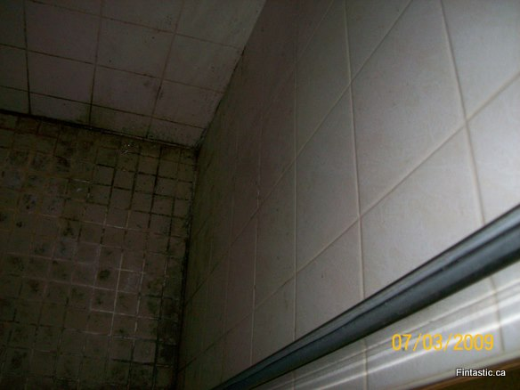 moldy-shower-tile before-3